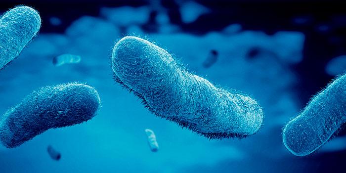 Бактерии-активируют-противоопухолевый-иммунитет