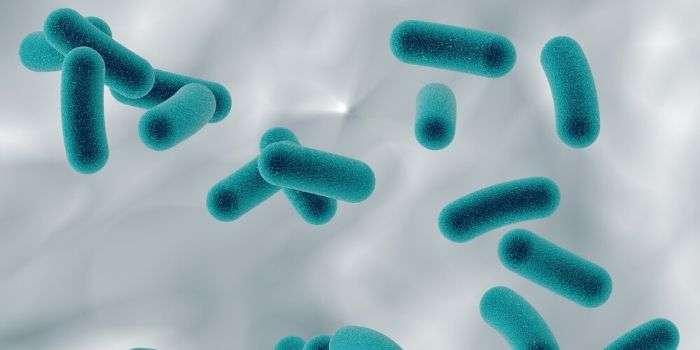 Бифидобактерии и иммунотерапия