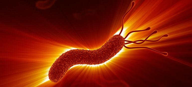 Как бактерии выживают в желудке