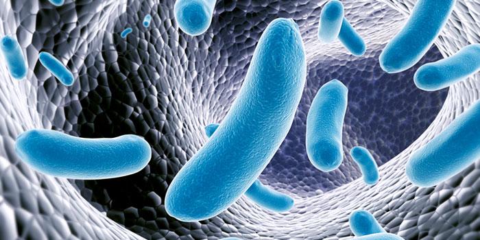 Кишечная-бактерия-и-рак-молочной-железы