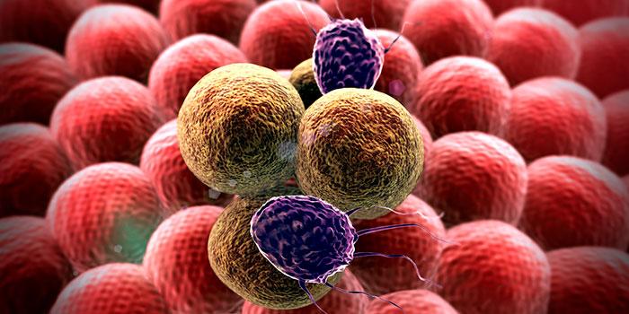 Лейкоциты-уничтожают-раковые-клетки