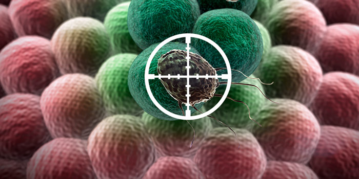 Обязательно ли убивать раковые клетки?