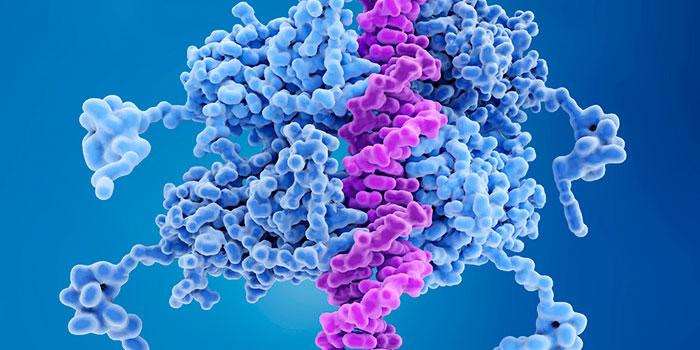 Восстановление-ДНК-может-приводить-к-раку