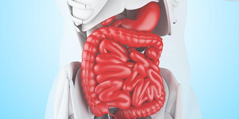 Кишечные бактерии регулируют противоопухолевый иммунитет в печени