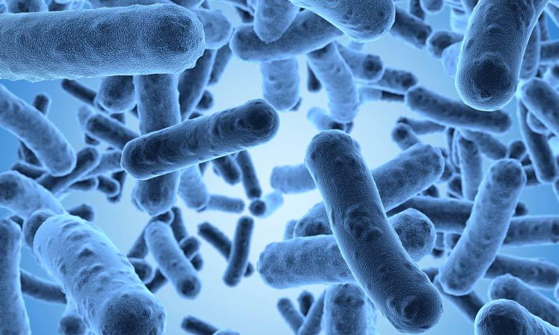 лактобактерии против токсинов