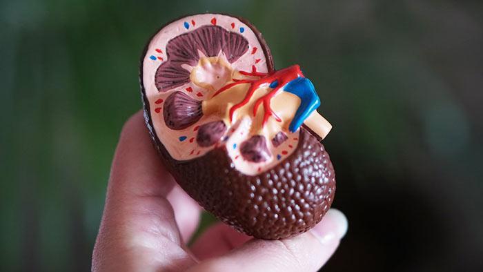 Подготовка к операции на почке опухоль — Здоровая печень