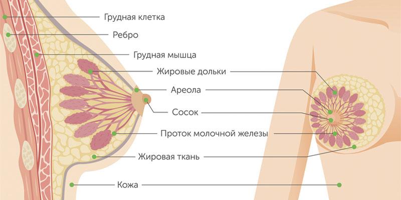 Частая локализация рака молочной железы