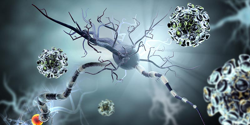 болезнь Гентингтона смертельно опасна для раковых клеток