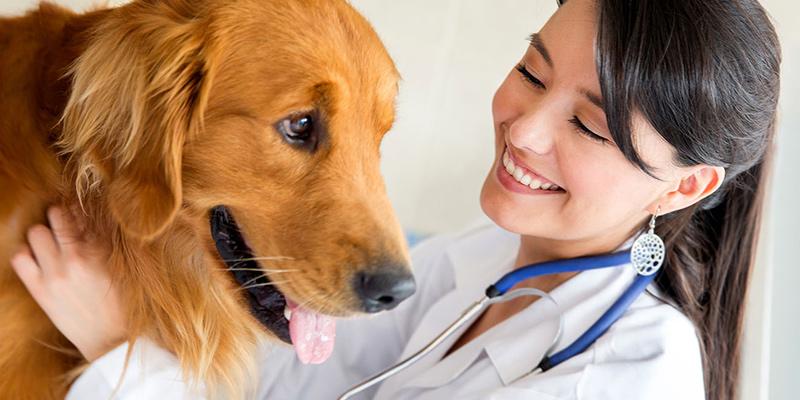 Собаки способны учуять рак