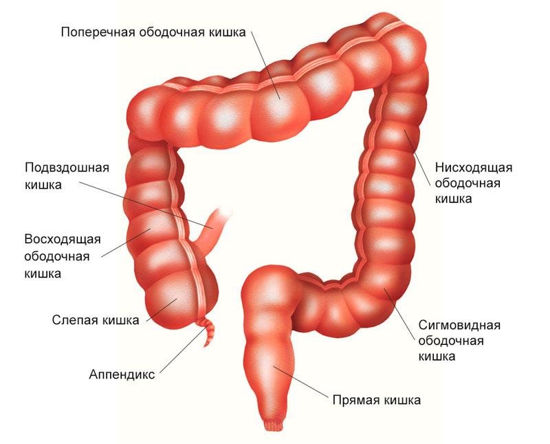 Рак большой кишки лечение